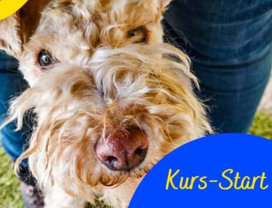 Kurs-Start beim Hundesportverein Dornbirn